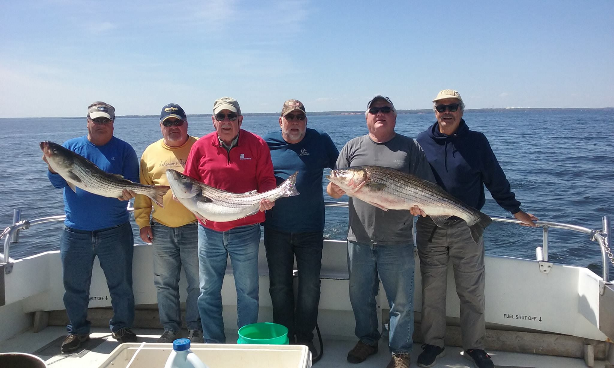 A Nice Catch of Trophy Rockfish On The Chesapeake Bay