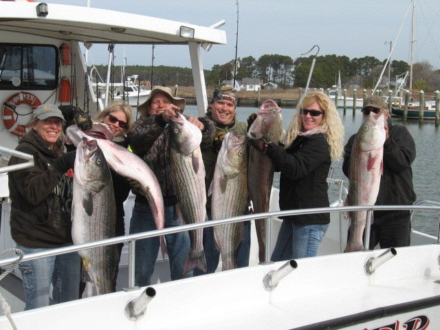 Trophy Chesapeake Bay Rockfish! Sawyer Chesapeake Bay Fishing Charters On Maryland's Eastern Shore!