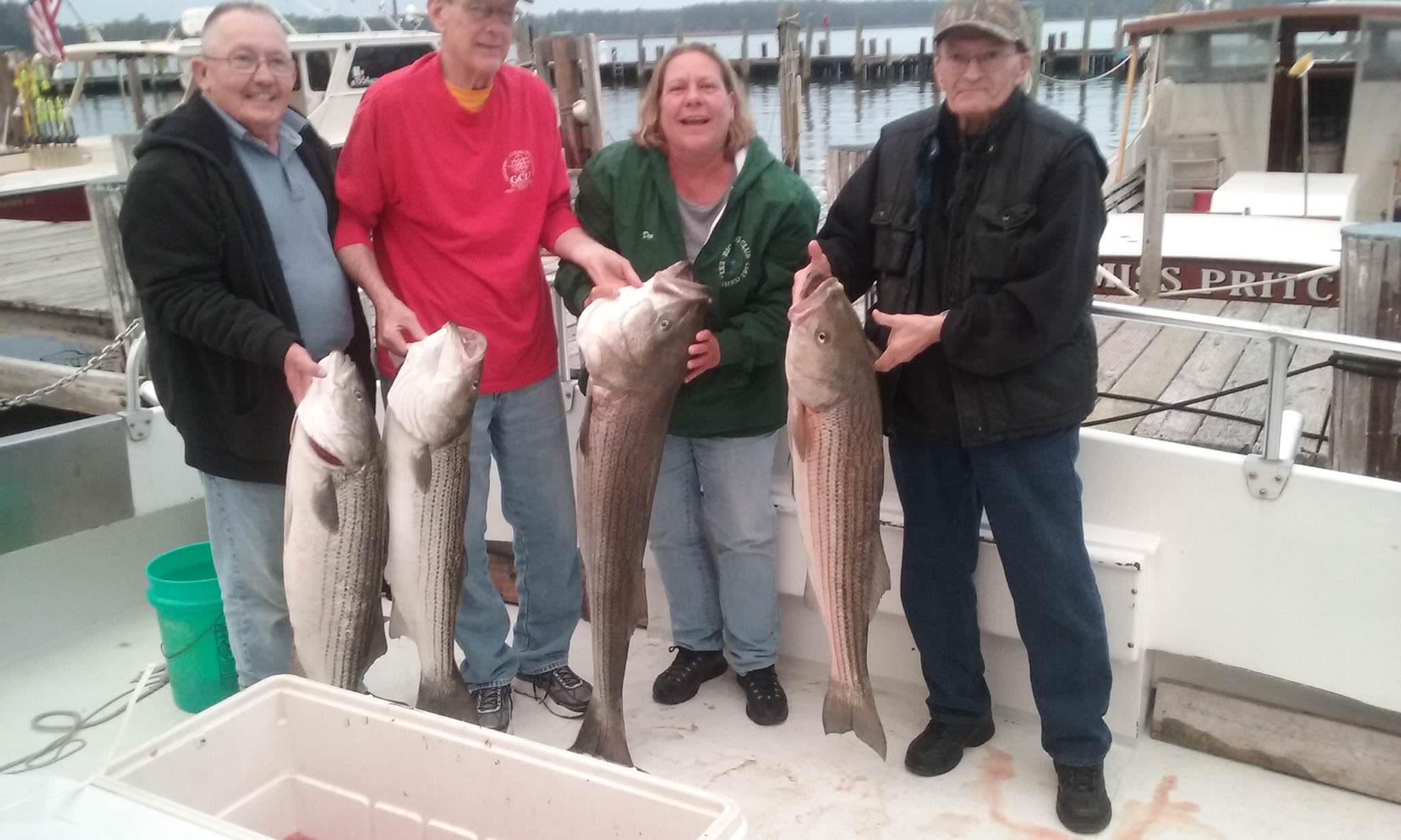 Four BIG Maryland Rockfish Caught On The Chesapeake Bay!