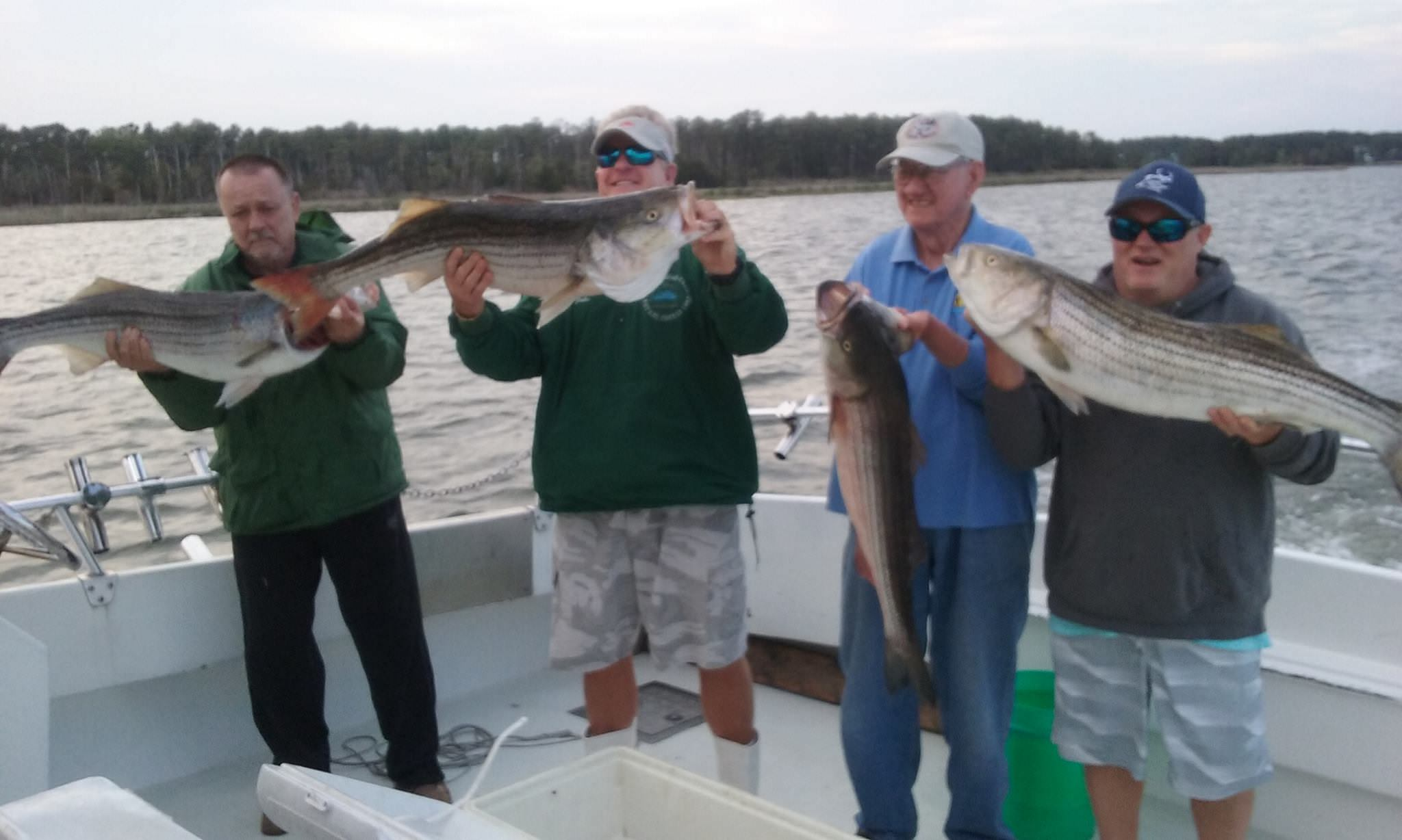 Four More Nice Trophy Rockfish!